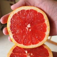 Red grapefruit 1