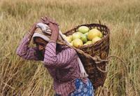 Sjerpa woman