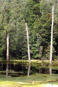 stump swamp 1