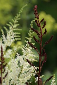 Flowers in the garden in Ammerzoden