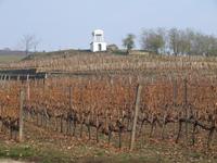 Tokaj vineyard (for raisin wine) before harvest