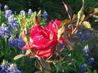 Texas Garden 2