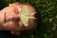 Green Moth 7
