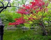 Lush Colors