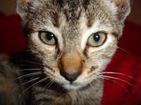 Cat Tisha