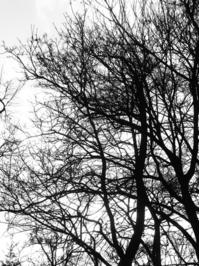 Leaves free trees.
