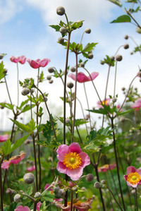Flowers where born