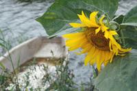 Van Gogh's flower