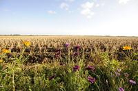 Dutch Countryside 3