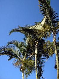 palms and sky 1