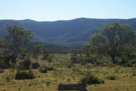 Bunya Mountains 3