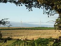 Field of Straw 2