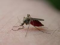 mosquito bite 3