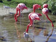Water Birds 2
