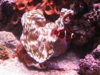Silky Sea Creature