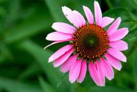 Bright Pink Flower 2