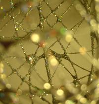 Glitter #1