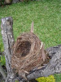 Empty nest 1
