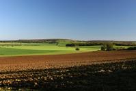 Field 12