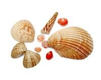 seashells 3