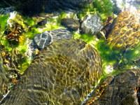 Shallow Ocean Water 3