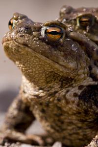 Toads 2