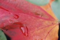 Autumn 2005 1