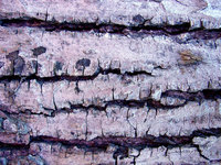 Bark Textures 2