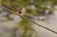 Dragonfly landed 2
