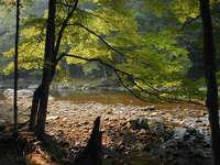 Cranberry River 3