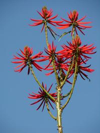 Exotic flower at UERJ