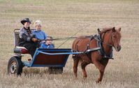 Pony driving