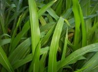 Miscellaneous Plants 4