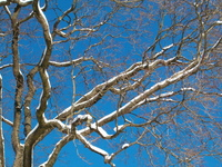 Snowy tree 3