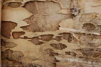 Wood Textures 2 2