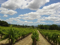 Rolling Clouds and Vineyards
