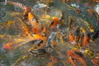 Wonderland fish tank