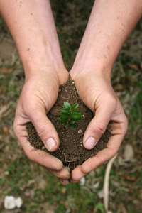 Handful of Dirt 4