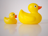 bath ducks
