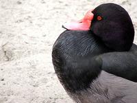 Jacksonville Zoo Bird