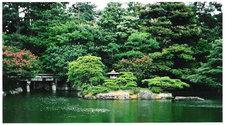 bonsai - garden in japan 1