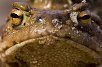 Toads 3