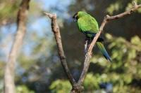 Amazonian birds 2