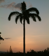 Tropical sunset 3