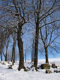 winter landscape 03