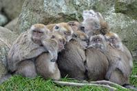 Monkey family 1
