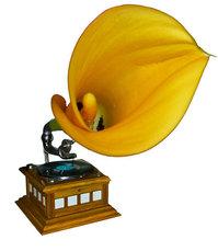 Flower Gramophone