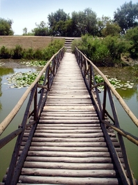 Danube delta 13