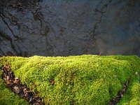 Mosswater