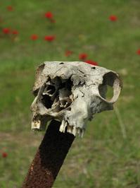 skull 2 /clipping path